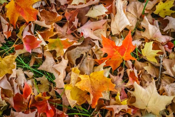 folhas de outono no chão - parte inferior - fotografias e filmes do acervo