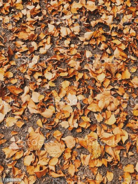 Photo of Autumn leaves on the ground