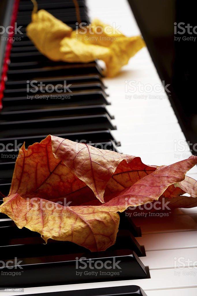 Autumn leaves on the keys stock photo