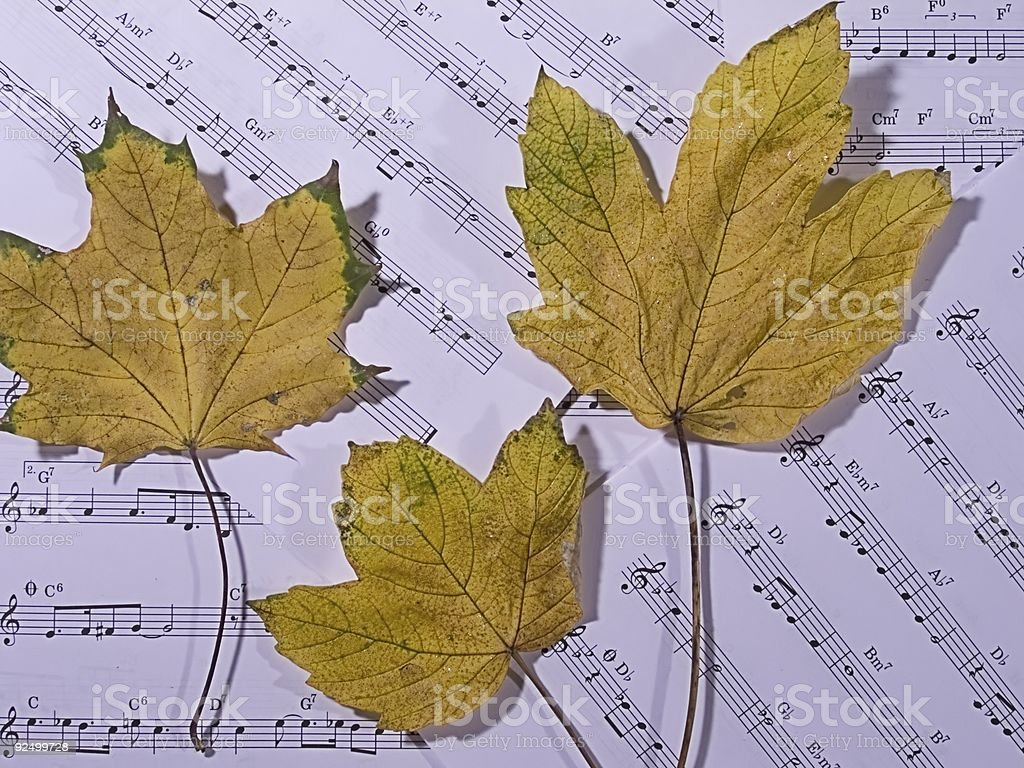 Autumn leaves on the sheet music royalty-free stock photo