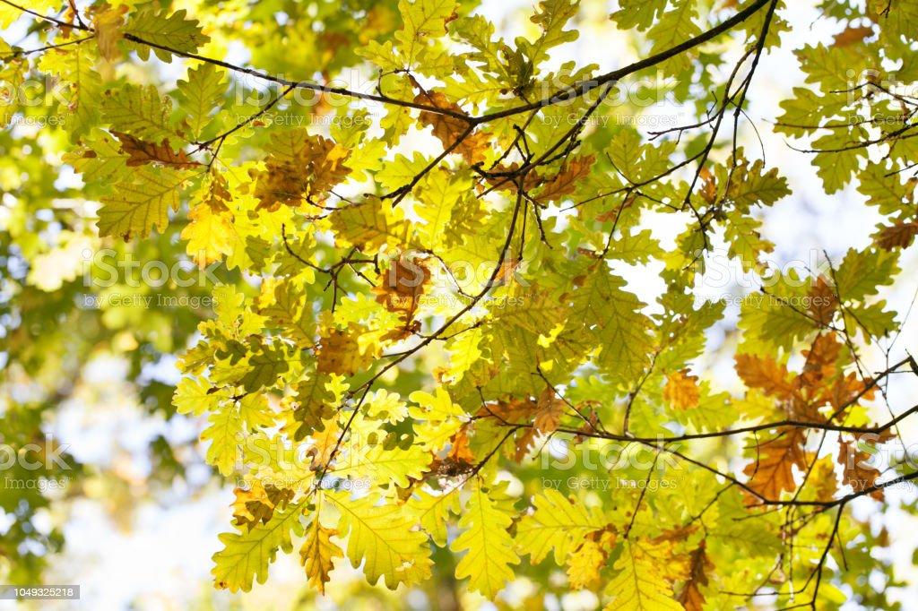 Autumn leaves on the sun stock photo