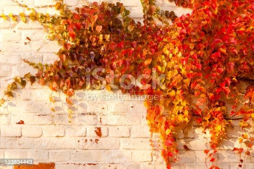 photo of autumn leaves on the wall
