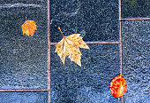 Autumn Leaves on the Wet Pavement . Fall Background with dry Leaves after the rain