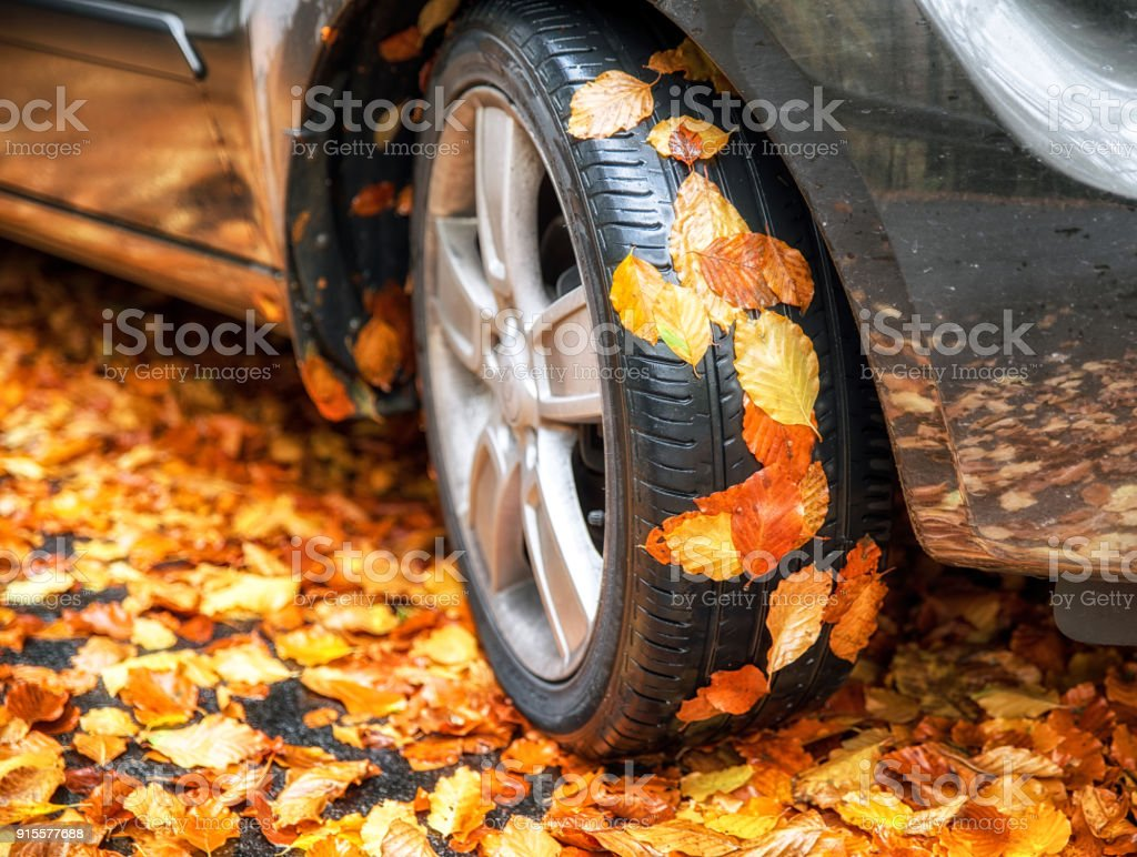 Autumn leaves on tire of car stock photo