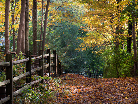 Pastoral rural scene of brightly colored trees and fallen leaves on an early fall morning in Wyomissing Park in Berks County, PA
