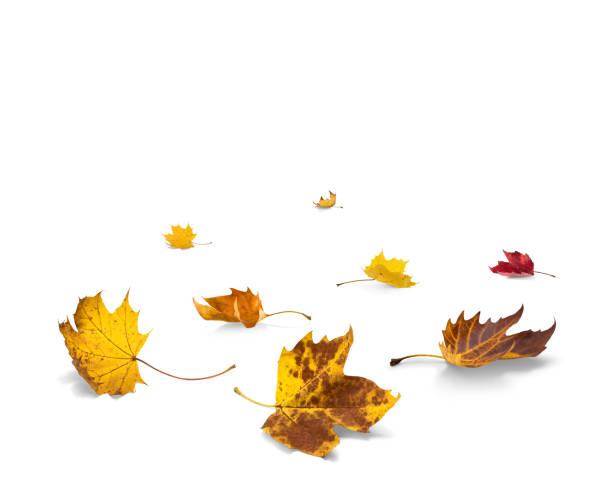 Feuilles d'automne sur le fond blanc - Photo