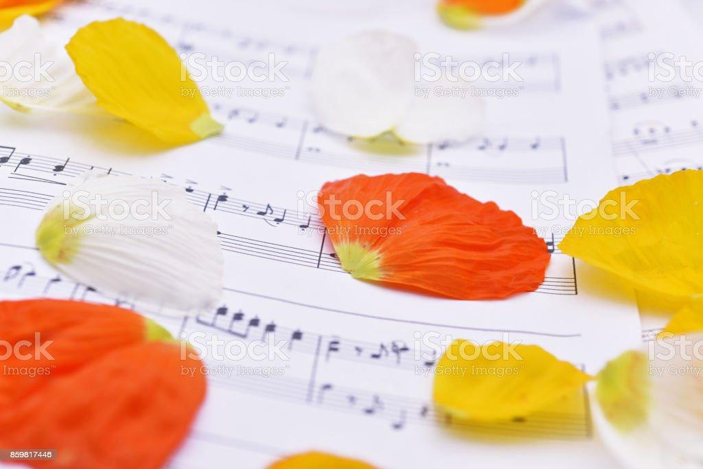 Autumn leaves on white paper. stock photo