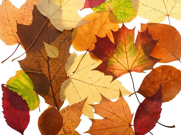 Herbst Blätter auf Weiß – Foto