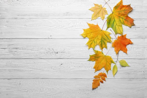 Herbstblätter auf weißem Holzhintergrund. – Foto