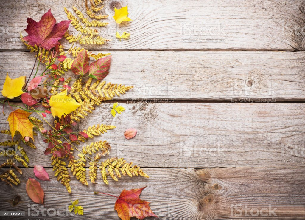 autumn leaves on wooden background royalty-free stock photo