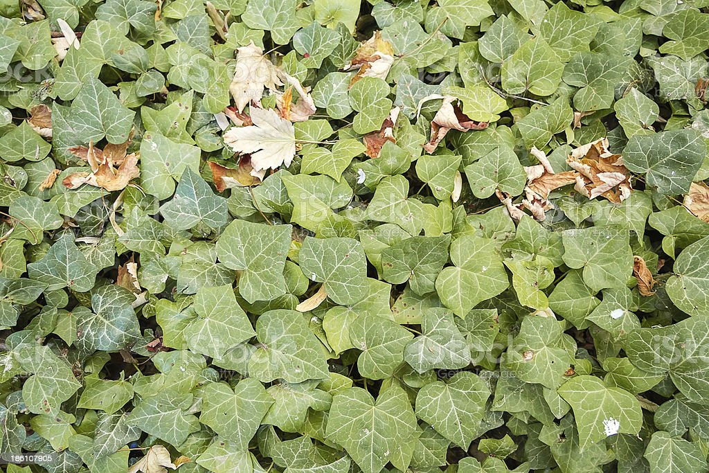 Autumn leaves over nature background royalty-free stock photo