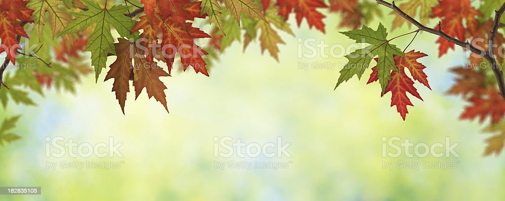 Autumn Leaves Panorama royalty-free stock photo