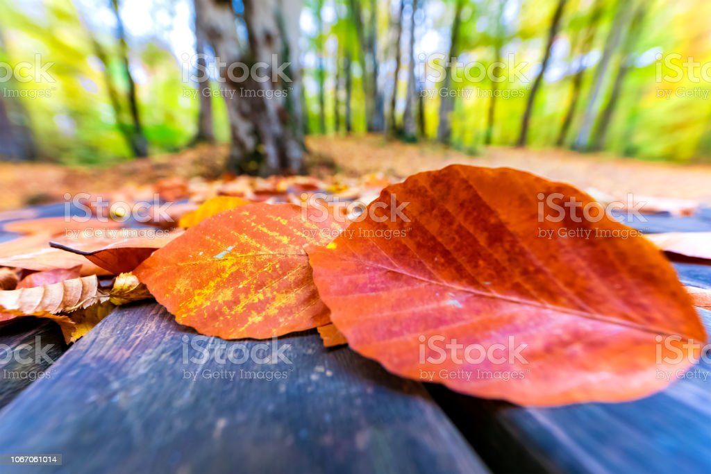 Sonbahar yaprakları stok fotoğrafı