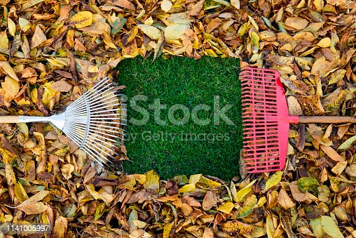 Autumn leaves - gardening - copy space