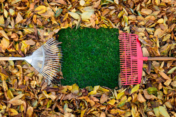 Herbstszenen – Foto