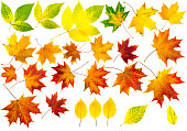 Collection of autumn leaves. Isolation with clipping paths