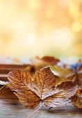 Autumn leaves on wood floor against defocused lights background
