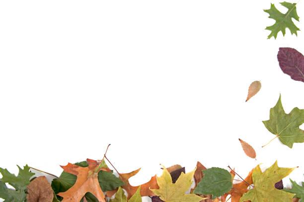 Cтоковое фото Autumn Leaves