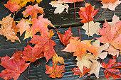 autumn leaves lying at random on a boardwalk