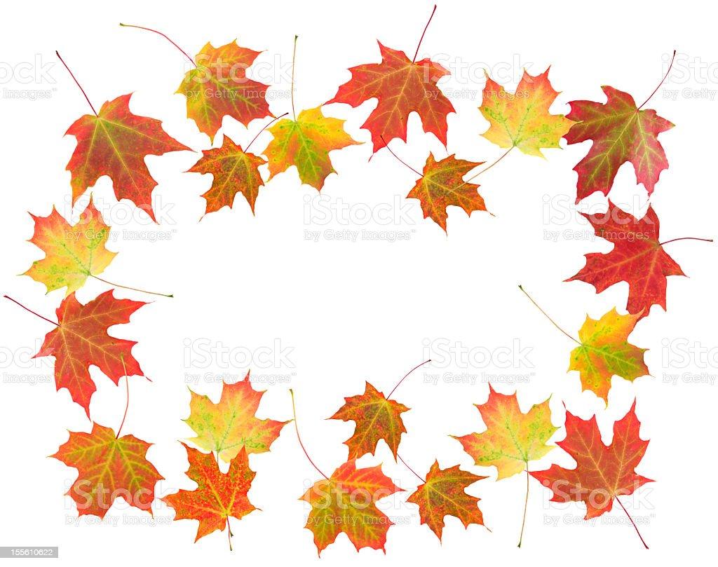 Autumn Leaves  (XXL) royalty-free stock photo