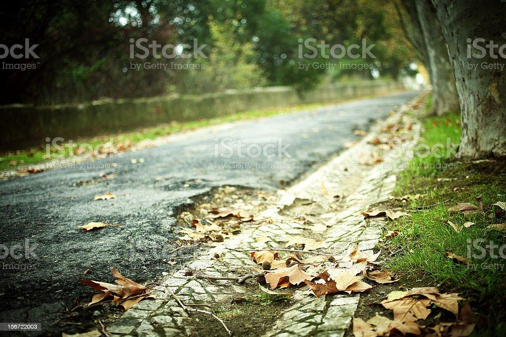Autumn Leaves Autumn leaves on a sidewalk Autumn Stock Photo