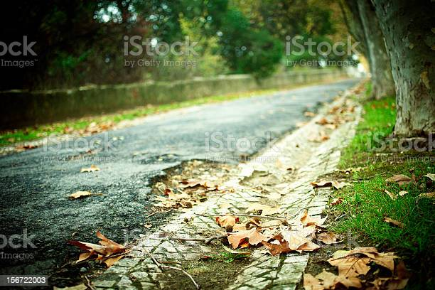 Autumn Leaves Stock Photo - Download Image Now