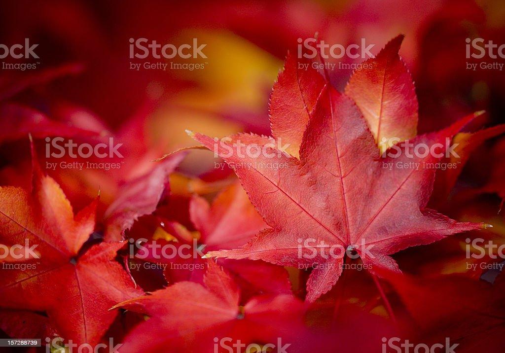 Herbstmuster – Foto