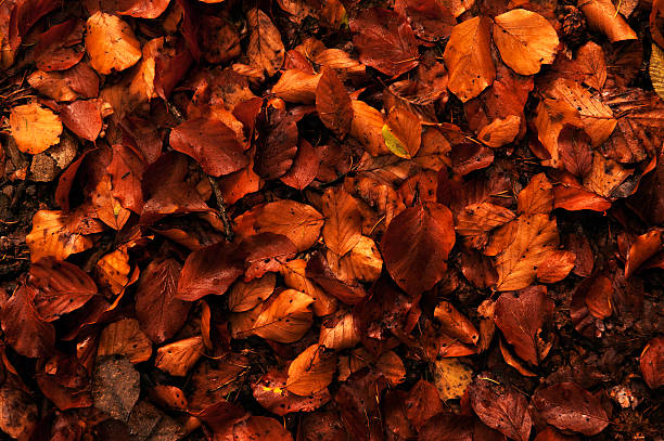 autumn leaves - foliate pattern stock photos and pictures