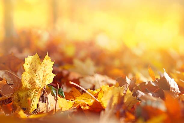 folhas de outono - setembro amarelo - fotografias e filmes do acervo