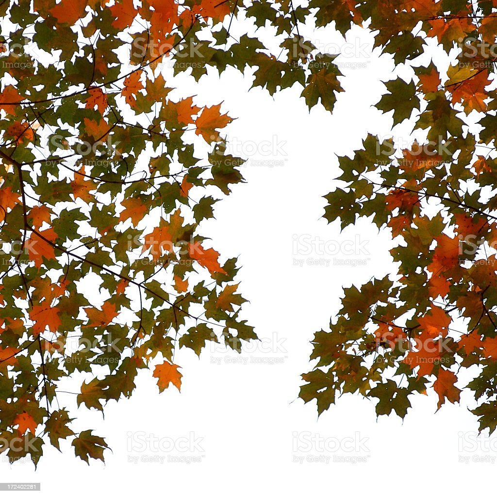 Autumn leaves (against white) royalty-free stock photo