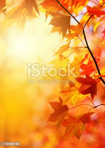 Fall foliage in a forest.Added fine grain.