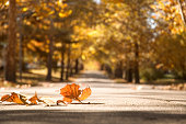 A beautiful Fall Scene. Focus on leaves on the ground.