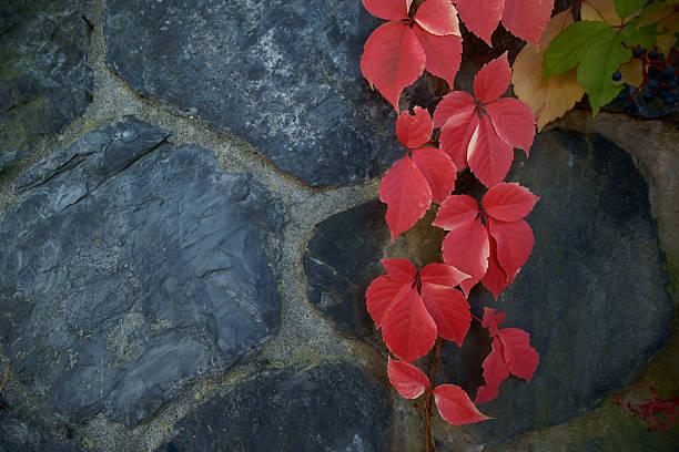 autumn leaves - adomer stok fotoğraflar ve resimler