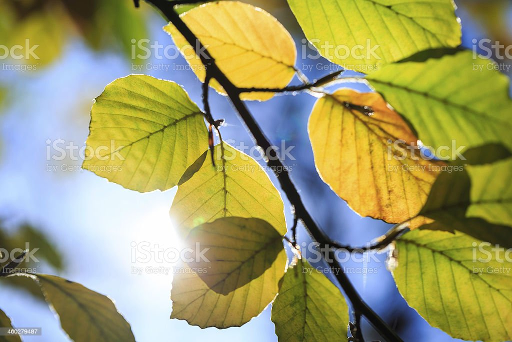 Jesień liście zbiór zdjęć royalty-free