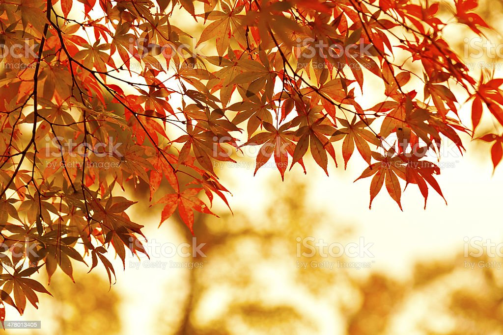 Autumn leaves. stock photo