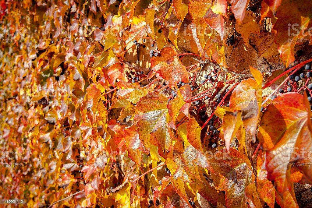Autumn leaves - Royalty-free 2015 Stock Photo