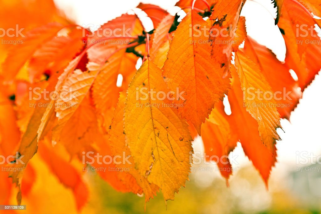 autumn leaves picture id
