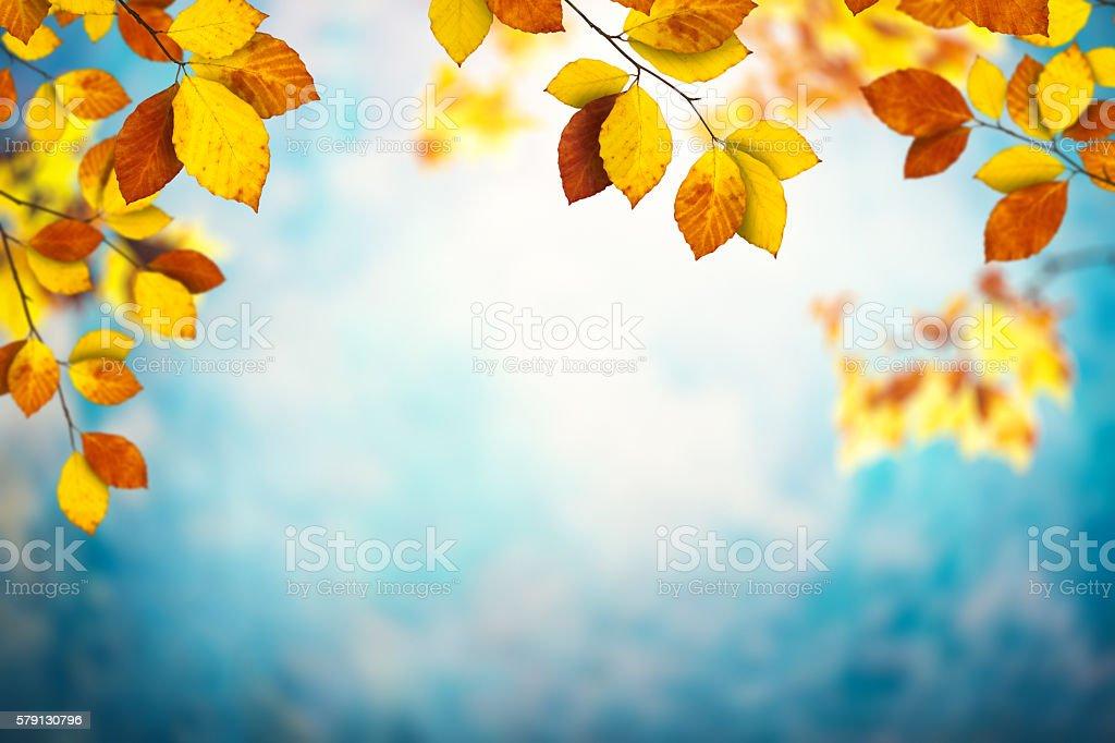 Feuilles d'automne - Photo