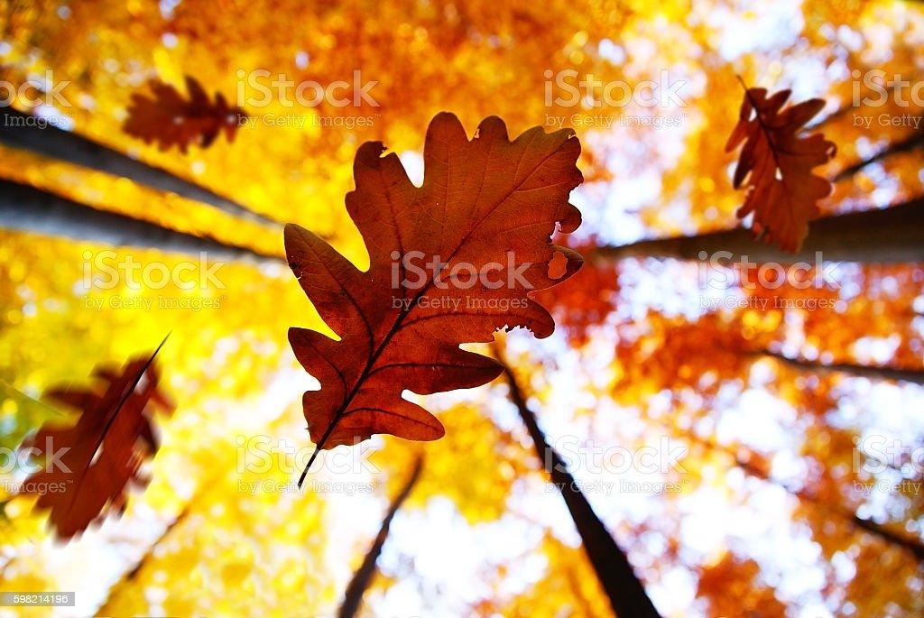 Folhas de outono  foto royalty-free