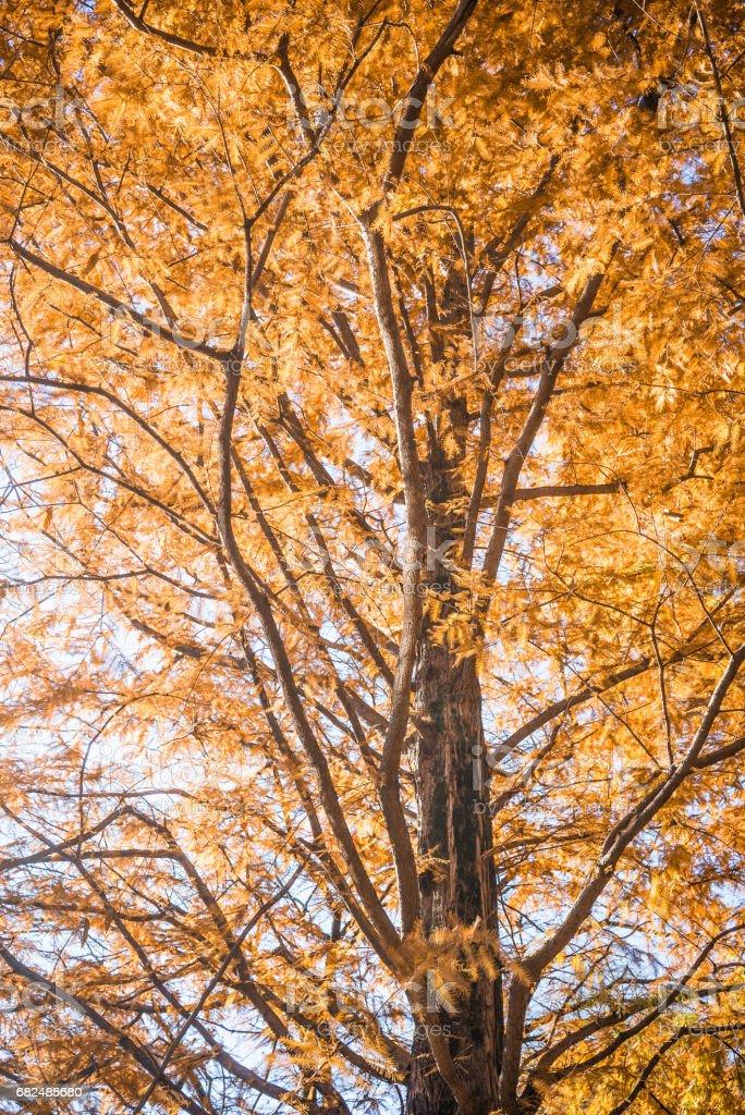 Herbstmuster Lizenzfreies stock-foto