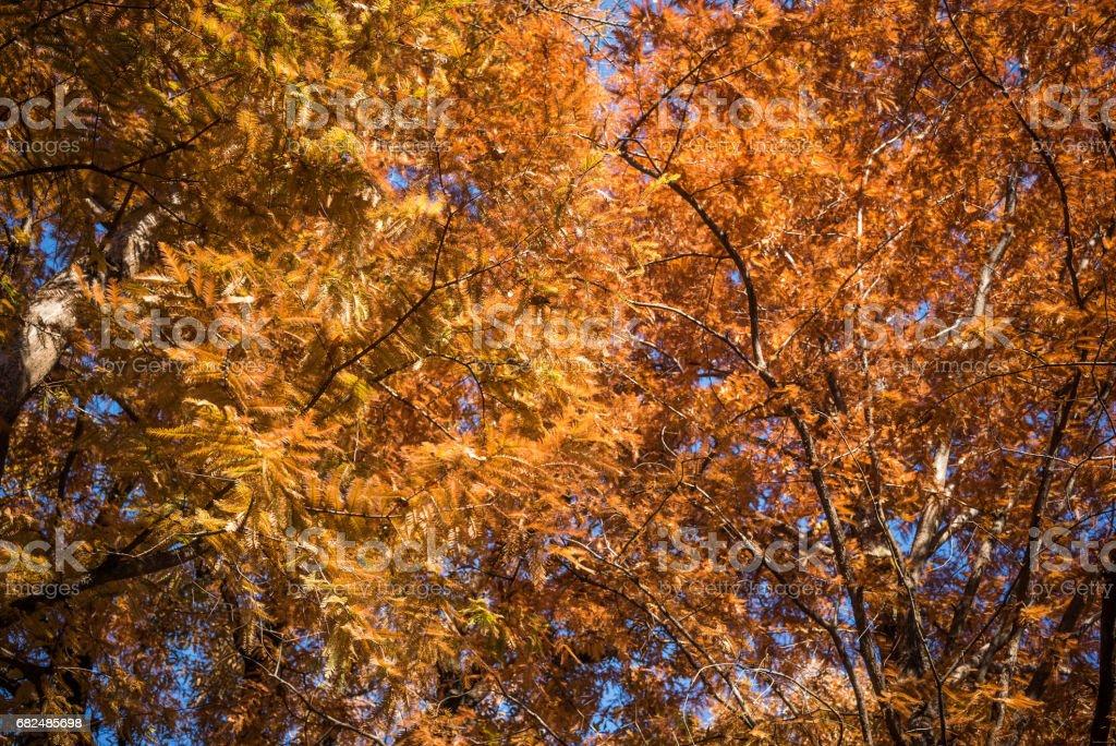 Autumn leaves Стоковые фото Стоковая фотография