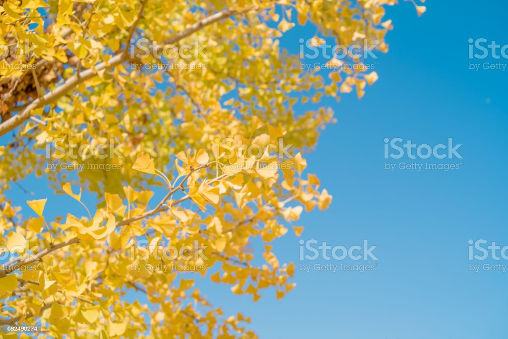 Autumn leaves foto stock royalty-free