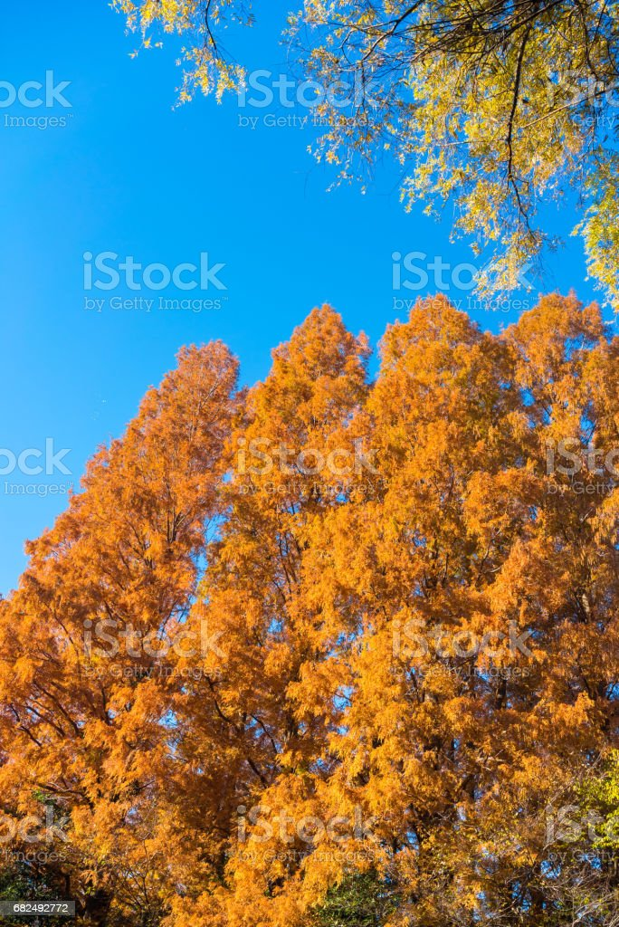 Sonbahar yaprakları royalty-free stock photo