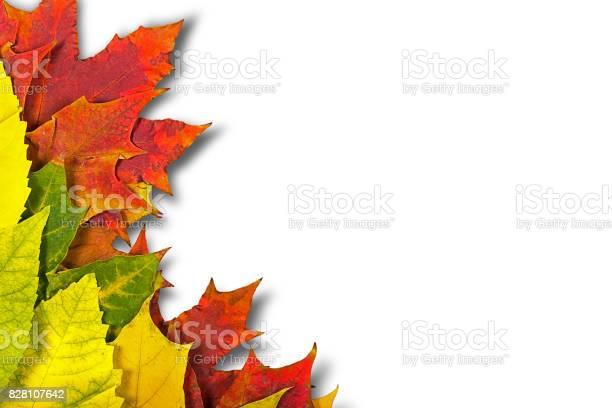 Photo of autumn leaves.