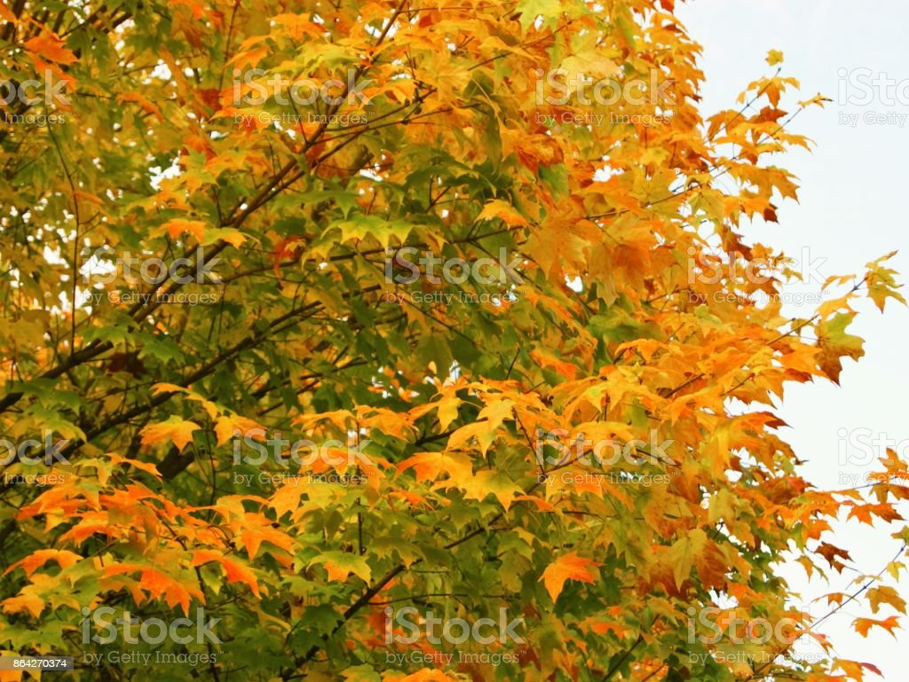Autumn Leaves. royalty-free stock photo