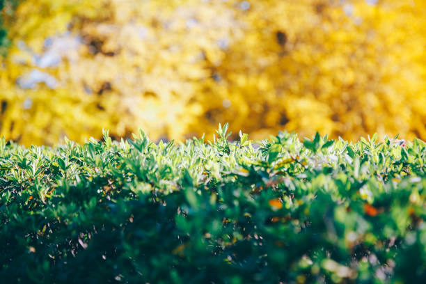 秋の落ち葉  - j_nice ストックフォトと画像