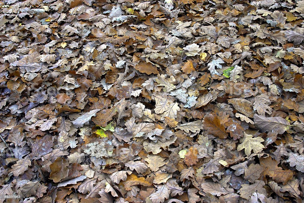 Foglie d'autunno foto stock royalty-free