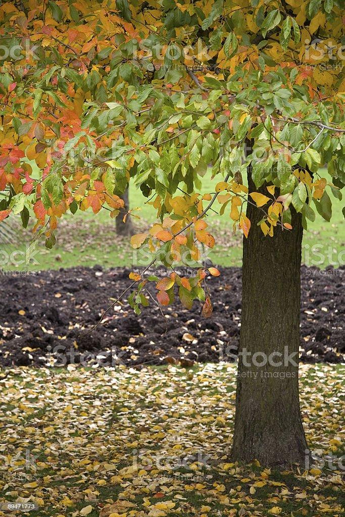 Autumn листья Стоковые фото Стоковая фотография