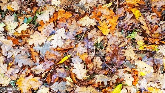 625881376 istock photo Autumn Leaves 901053798