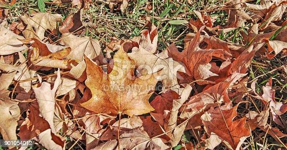 625881376 istock photo Autumn Leaves 901054012